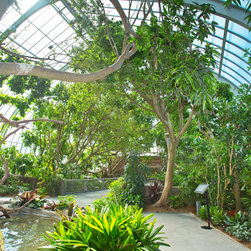 Tropical Rainforest Exhibit at the National Aviary, Pittsburgh, Pa.